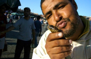 Marraquech, Morroco Snake whisperer